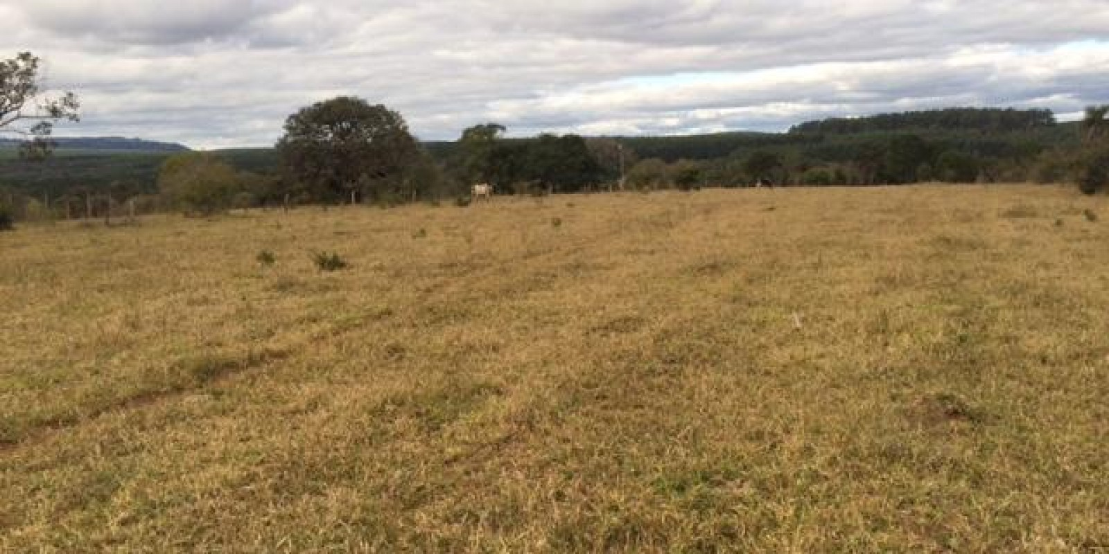 Fazenda 34 Alqueires em Avaré SP - Foto 2 de 60