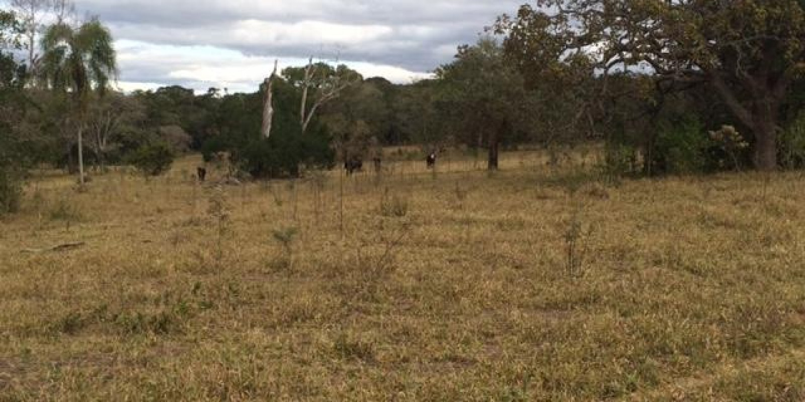 Fazenda 34 Alqueires em Avaré SP - Foto 9 de 60
