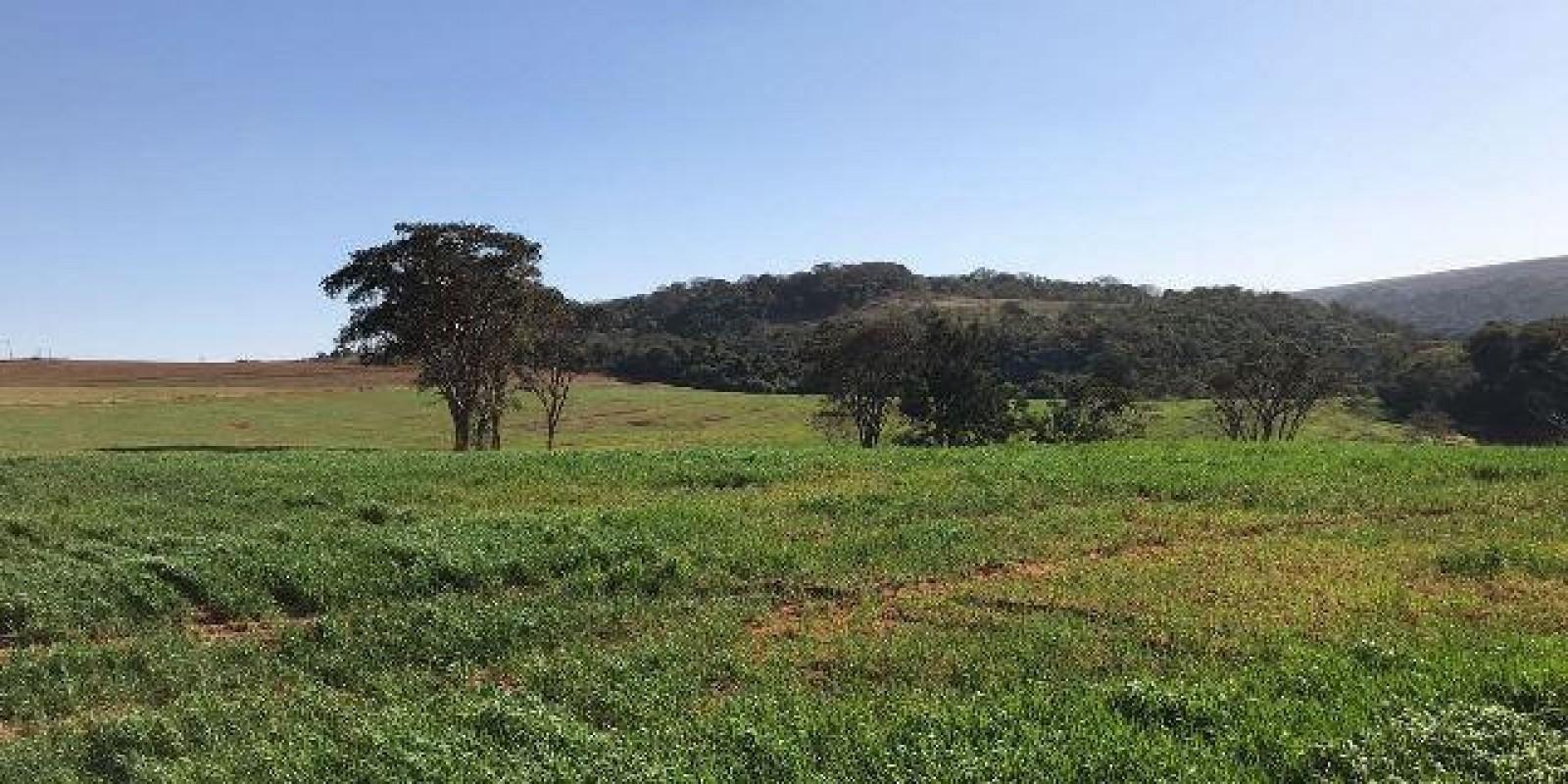 Fazenda de 40 Alqueires, Município de Sarutaiá Sp - Foto 3 de 20