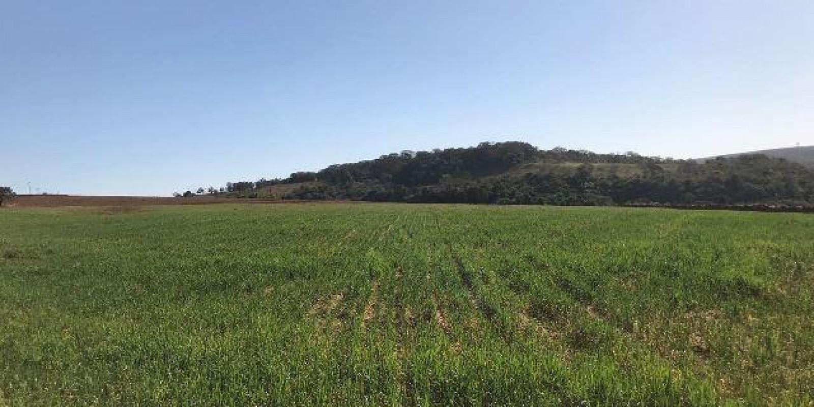 Fazenda de 40 Alqueires, Município de Sarutaiá Sp - Foto 4 de 20