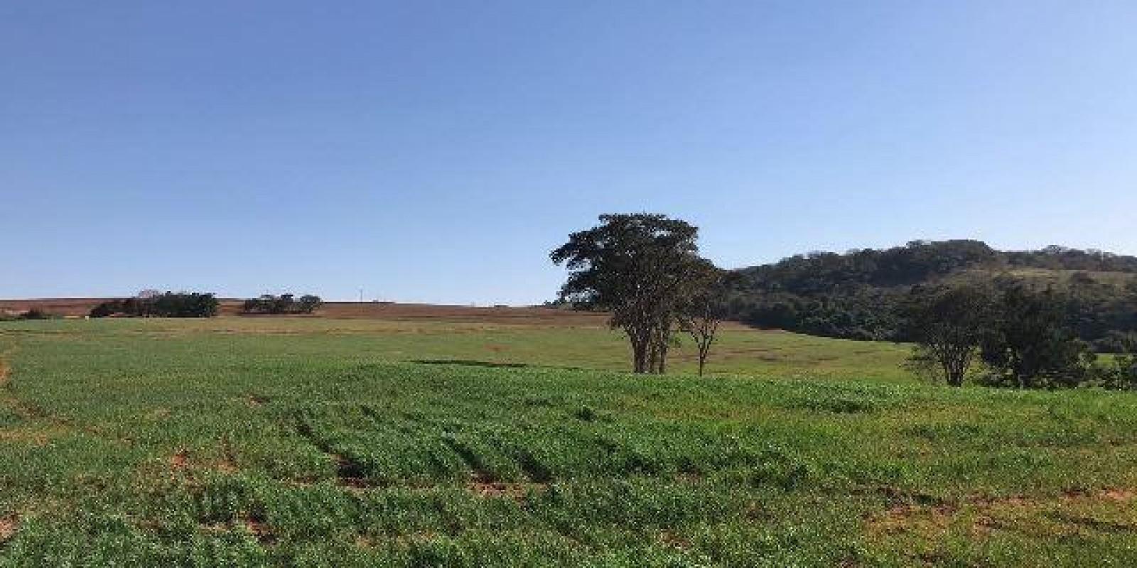 Fazenda de 40 Alqueires, Município de Sarutaiá Sp - Foto 5 de 20
