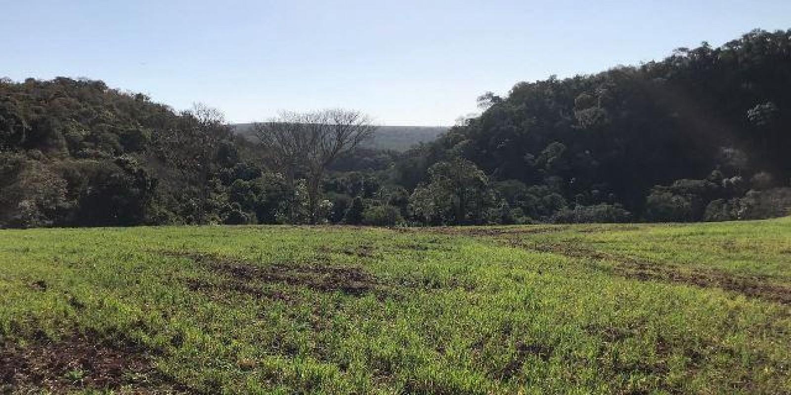 Fazenda de 40 Alqueires, Município de Sarutaiá Sp - Foto 6 de 20