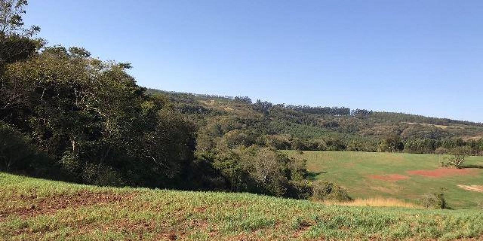 Fazenda de 40 Alqueires, Município de Sarutaiá Sp - Foto 7 de 20