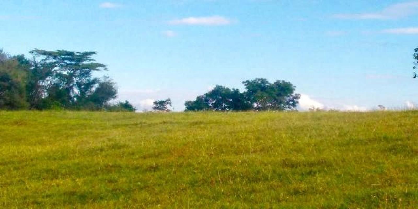 Sítio de 7.1 Alqueires em Arandu SP  - Foto 19 de 21